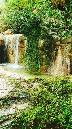 Sanpatrignano Water Daydreaming Plants Green Grey
