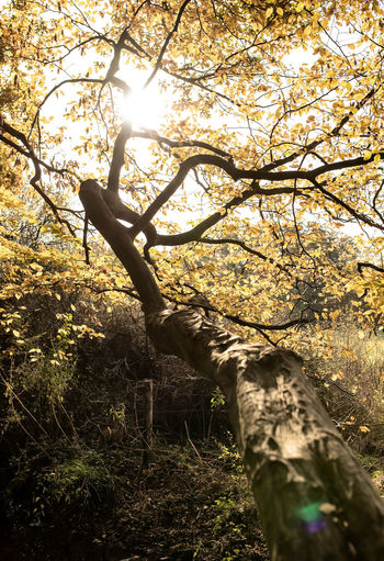 Tree Plant Branch Nature Animal Sunlight One Animal Mammal Animal Themes No People Low Angle View Tree Trunk Trunk Forest Animal Wildlife Land Day Animals In The Wild Vertebrate Sky Outdoors