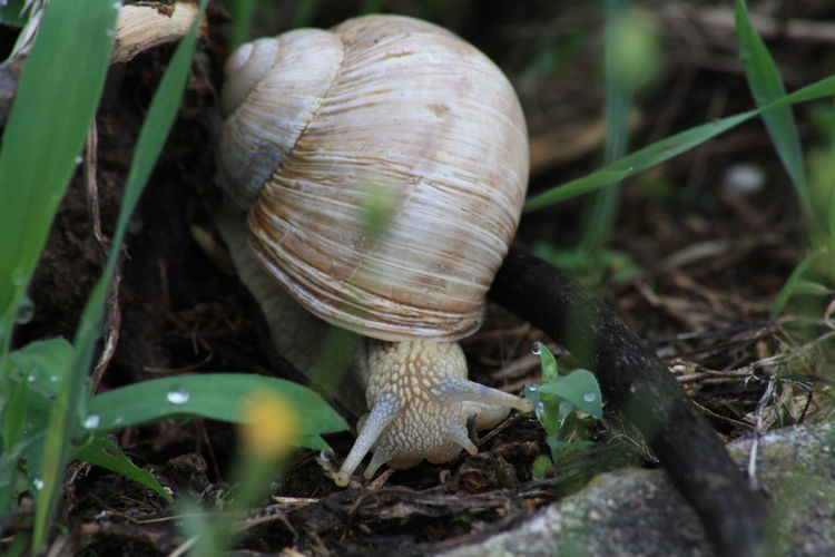Close-up of snail on field