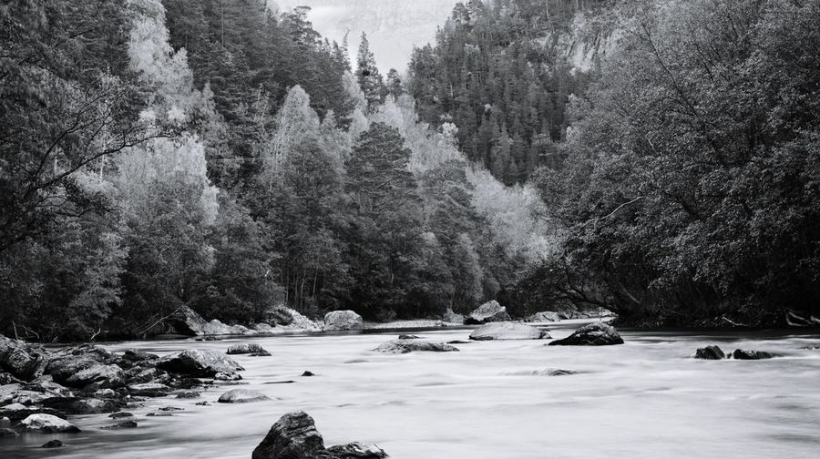 Beauty In Nature No People Nature EyeEm Selects Non-urban Scene Norway Perspectives On Nature North Of Norway Outdoors Trees! Wallpaper River Rocks Water Blackandwhite Photography Black And White Collection  Monocrome Landscape Saltdal Junkerdalsura Forest Photography Forest Black And White Friday