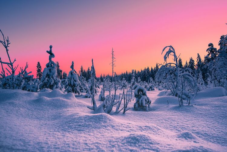 Winter wonderland and beautiful nature of Lapland Snow Cold Temperature Winter Tree Sky Nature Beauty In Nature Land Frozen Landscape No People Tranquility Tranquil Scene Winter Lapland Winter Wonderland Colors Nature Forest Arctic Travel Hello World Eye4photography  Outdoors Exploring