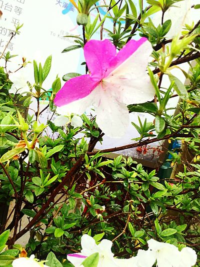 Leaf Growth Nature Plant Flower Beauty In Nature Petal