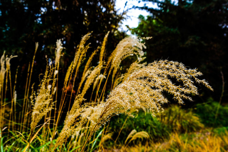 Lean Growth Nature Tree Grass Plant No People Outdoors Beauty In Nature Flower Close-up Freshness Day Eyemphotography Yellow Leaves Green Color Lowkeyphotography Textured  Petal Wildflower Growth Plant Beauty In Nature Low Angle View Fujifilm_xseries Available Light