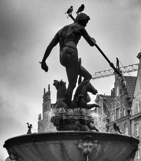 Statue Black And White City Monument Day History Polska Danzig, Poland Gdańsk 👌🏼 Birds Neptun Neptune Neptune Statue Neptun Fountain