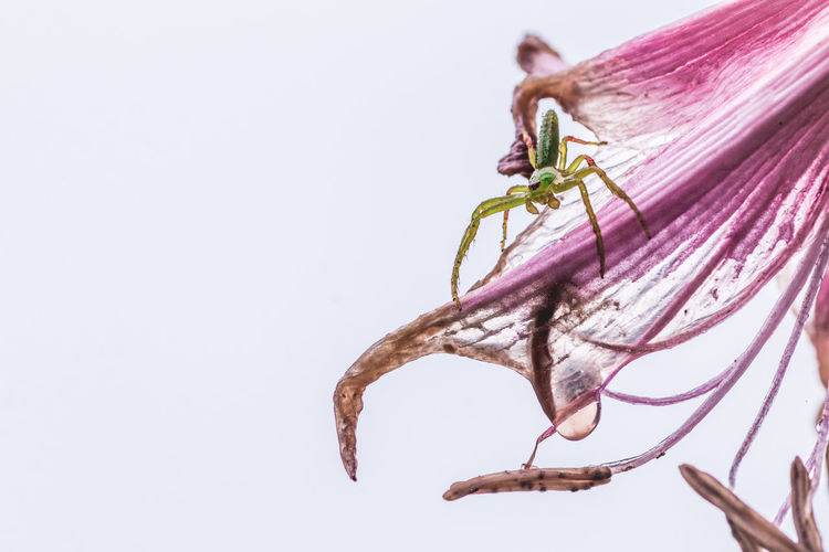 Insect Abstract Pink Color Pink Green Exceptional Normalcy Alien Fine Art Beautiful Nature Animal Themes Alone Flower Water Drop Creature Purple EyeEm Best Shots Naturelovers Macro Futuristic Drastic Edit Color Surge Plant Close-up White Background Studio Shot Copy Space No People Animal One Animal Nature Branch Fragility Animal Wildlife Freshness Vulnerability  Flowering Plant Invertebrate Animals In The Wild Outdoors Wilted Plant My Best Photo