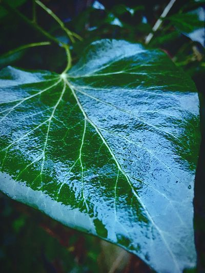 Wet Leaf Leaf Close-up Nature Day No People Outdoors Fragility Beauty In Nature Freshness
