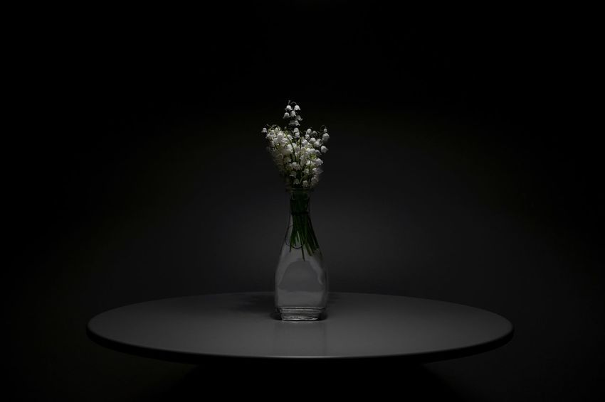 When darkness overwhelms me, I find the light in the little things. My favorite flowers ♥️ EyeEm Best Shots Eye4photography  Indoors  Vase Studio Shot No People Table Nature Black Background Copy Space Plant Still Life Freshness Glass - Material Vulnerability  Flower Arrangement Decoration Visual Creativity