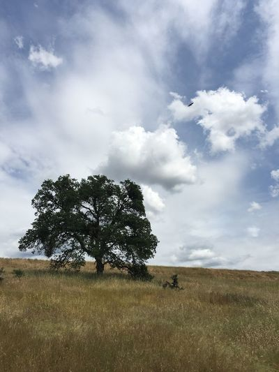 Tree Growing On Grassy Field Against Cloudy Sky