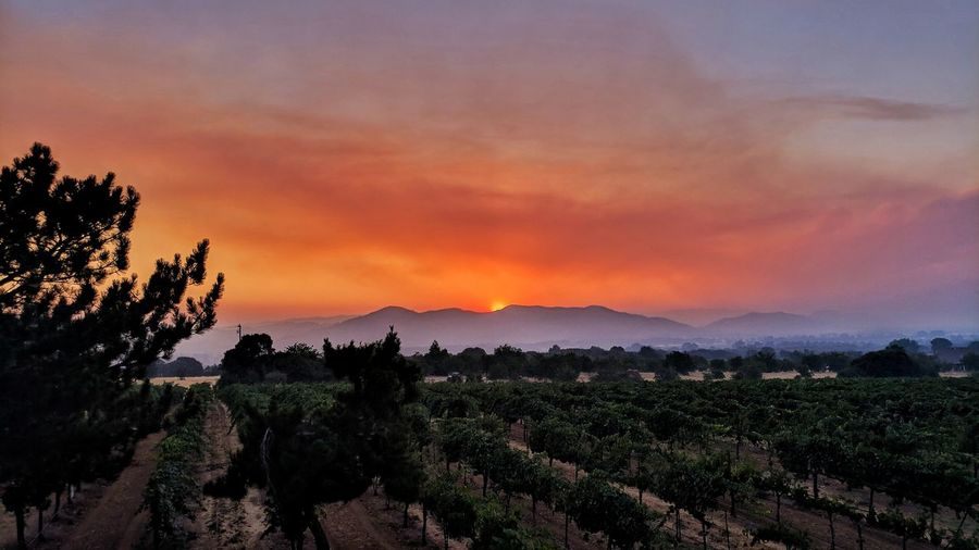 Tree Mountain Sunset Agriculture Rural Scene Dramatic Sky Sky Landscape Vineyard Vine - Plant Winemaking Agricultural Field