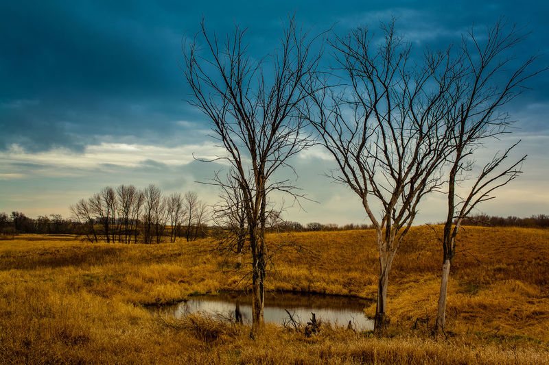 Three Trees Bare Tree Beauty In Nature Branch Cloud - Sky Day Eye4photography  EyeEm Best Shots EyeEm Nature Lover EyeEmNewHere Field Grass Landscape Lone Nature No People Outdoors Scenics Sky The Great Outdoors - 2017 EyeEm Awards Tranquil Scene Tranquility Tree Tree