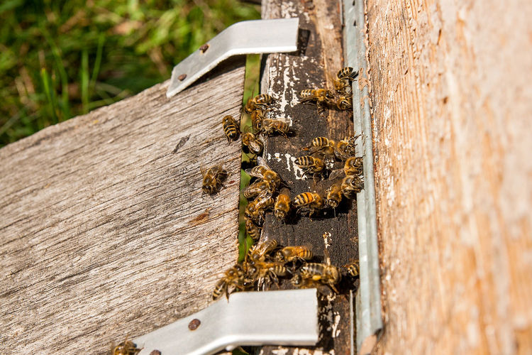 Animal Animal Themes Animal Wildlife Animals In The Wild APIculture Bee Beehive Close-up Day Group Of Animals Honey Bee Insect Invertebrate Large Group Of Animals Nature No People Outdoors Selective Focus Sunlight Wood - Material