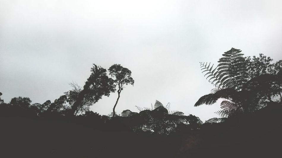 Silhouette Sky No People Nature Outdoors Low Angle View Animal Themes Tree Day Beauty In Nature Motography Travel Mountain Green Forest Forestwalk Forests Forest Flora Flora Forest Trees Growth Scenics Negros Island Non-urban Scene Nature