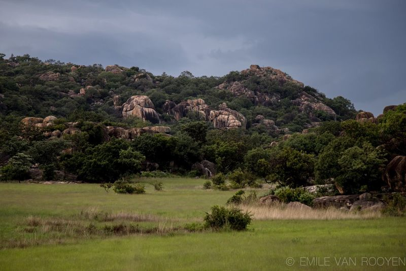 Amazing Matopos National Park. Nature Mammal Landscape Beauty In Nature Animal Themes No People Scenics Sky Tranquil Scene Tree Field Outdoors Tranquility Grass Day Cloud - Sky Animals In The Wild Zimbabwe Nature Reserve Non-urban Scene Mountain Beauty In Nature Grass