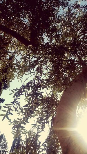 Sun Rays Beautiful Nature Photography Nature Nature Collection Beautiful Nature ❤❤ ☉☉☉ ☉🌞🌞☉ ☉ ☉☉ Beautiful Sun Sun