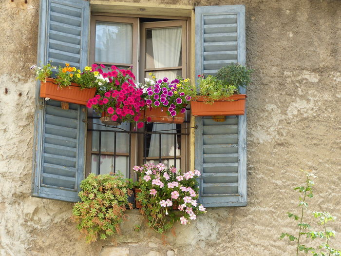 Window with vases of colored flowers to Bergamo in Italy. Architecture Beauty In Nature Building Exterior Built Structure Colored Flowers Day Flower Flower Head Growth House Italy❤️ Multicolored Flowers No People Old Town Outdoors Plant Potted Plant Vases Of Flower Window