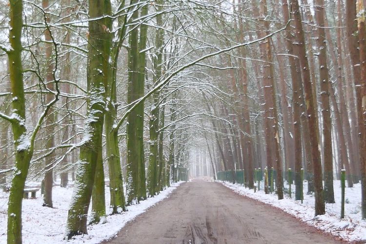 Tree Forest Nature Tree Trunk WoodLand Tranquility The Way Forward Beauty In Nature EyeEm Gallery EyeEm Nature Lover Eye4photography  EyeEm Best Shots My New Camera  Winter Cold Temperature Scenics Weather Snow Tranquil Scene Branch Non-urban Scene Outdoors Bare Tree Day No People