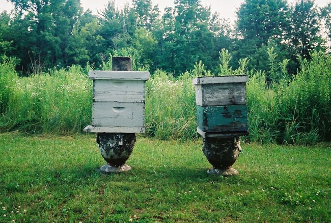 Apiary Grass Green Color Growth Outdoors No People Field Nature Bees Bee Box Bee 🐝 Apiary Bee Keeping Bee Keepers Bee Keeper