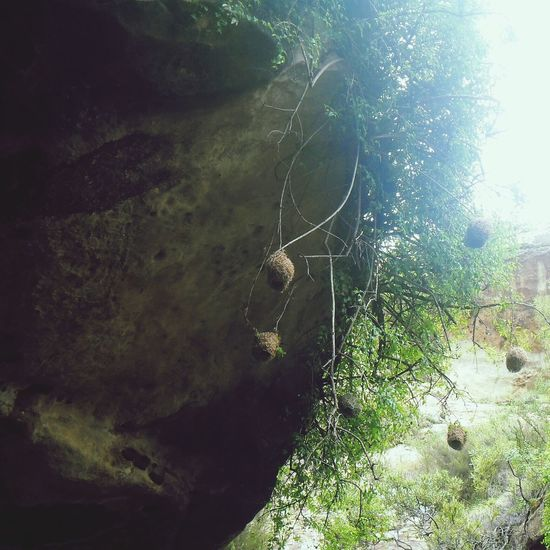 Up above a cave where birds breath easiest, home is where the nests are Rocks Bird Nests