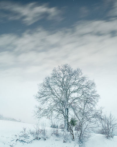 Monti Lessini Bare Tree Beauty In Nature Branch Cold Cold Temperature Day Isolated Landscape Lone Nature No People Outdoors Scenics Sky Snow Tranquil Scene Tranquility Tree Weather Winter