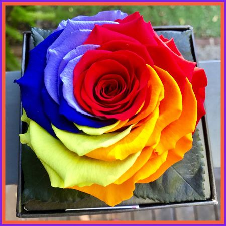 Rainbow flower 🌸🌺🌸 Flower Cocodesfleurs Likearainbow Birthdaypresent Beautiful