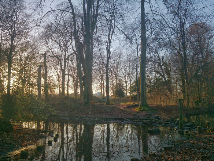 Tranquille soirée d'hiver. 2014. Camera : Smartphone Sony Xperia Z. Autumn Bare Tree Beauty In Nature Branch Day Forest Landscape Nature No People Outdoors Reflection Scenics Sky Tranquil Scene Tranquility Tree Water
