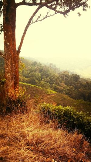 Hilltop Great Views Afternoon Delight Cameronhighlands Cameron Highlands, Malaysia Malaysia Asian Beauty
