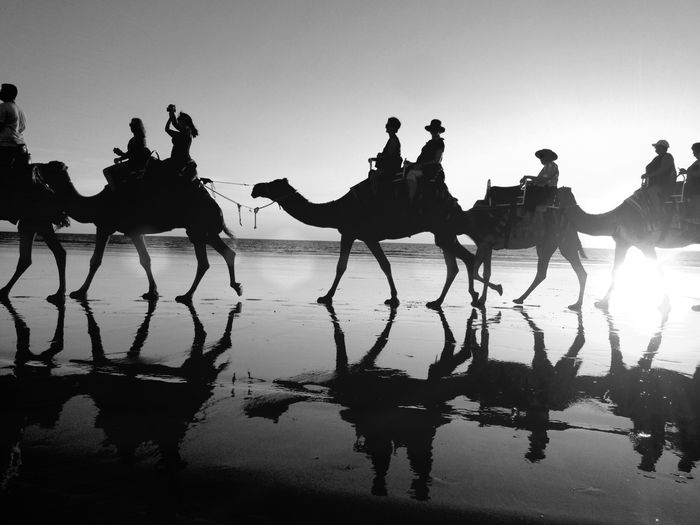 Sunset Sunset Silhouettes Sunset_collection Reflected Glory Blackandwhite Black And White Black & White Blackandwhite Photography Bnw B&w Summer Views IPS2016Composition Showcase: February Great Rays Bnw_friday_eyeemchallenge Tourist Attraction  Camels Reposted with edits Our Best Pics Monochrome Photography