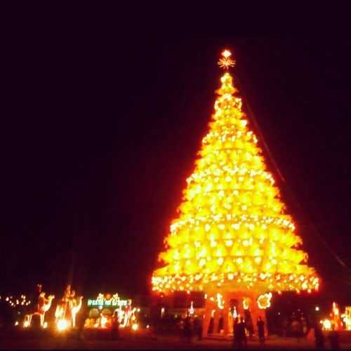 GiantChristmasTree Bais BaisCity Christmastree Yellow :3