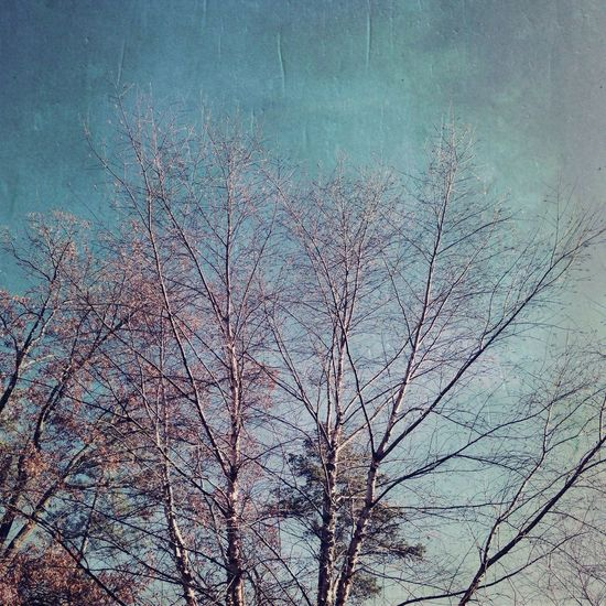 Saturday Nem Trees