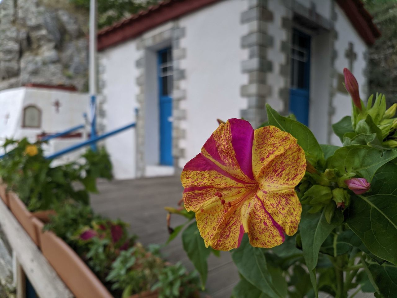 CLOSE-UP OF FLOWERING PLANT AGAINST BUILDINGS