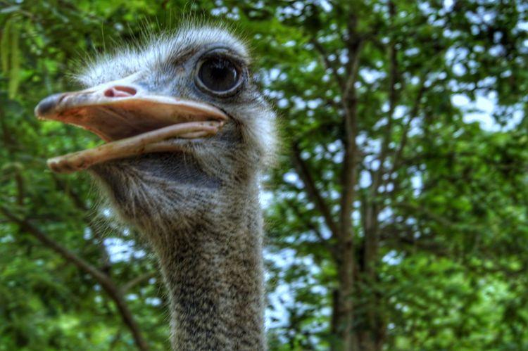 One Animal Animal Themes Animals In The Wild Focus On Foreground Close-up Animal Wildlife Outdoors No People Bird Nature Day Beak Mammal