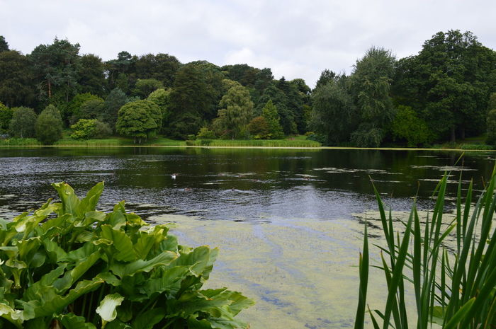 Beauty In Nature Calm Cloud - Sky Day Grass Green Green Color Growth Idyllic Lake Lush Foliage Mount Stewart Mount Stewart National Trust Nature Non-urban Scene Northern Ireland Outdoors Plant Reflection Remote Scenics Tranquil Scene Tranquility Tree Water