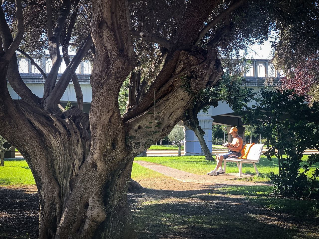 PORTRAIT OF TREE IN PARK
