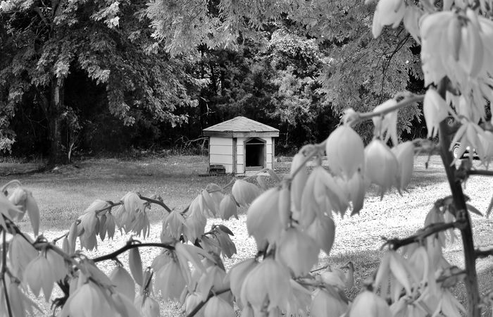 yard flower s and dog house black and white Architecture Black And White Built Structure Day Dog House Drive Way Flowers Focused Hanging Image Of Landscape Nature Nature No People Old Outdoors Photo Of Picture Of Plant Selective Focus Sunny Day Tranquility Tree Trees Yard
