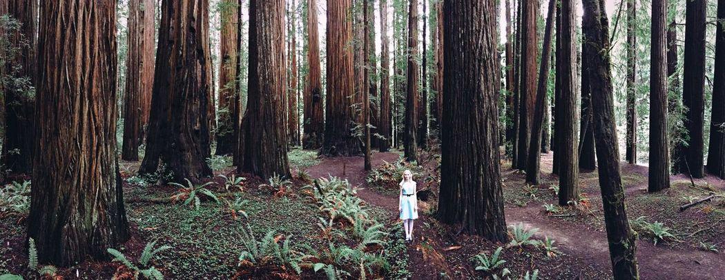 Little Alice, big world. Aliceinwonderland Humboldt County RedwoodsNationalPark Redwoods IPhoneography