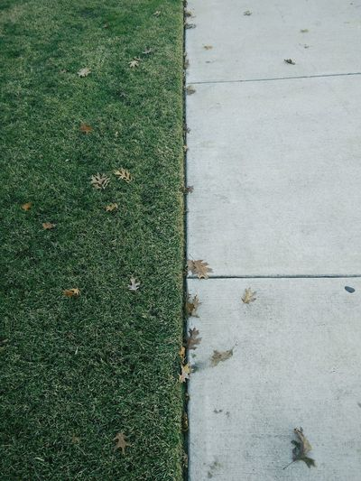 No paté le grass! I just had to in order to take this shot Sidewalk Lawn Linear 50/50 Division Green And Grey. Green Cement Fall Autumn Showcase: December Leading Lines Mobilephotography
