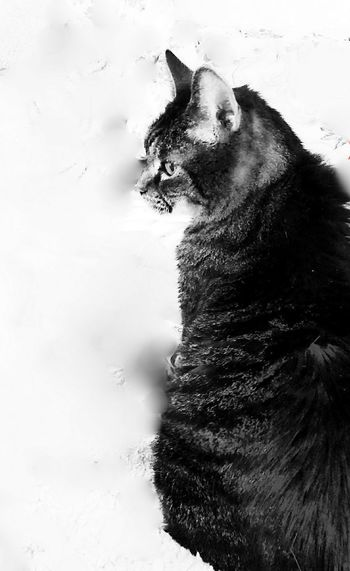 precious...~ Cats Of EyeEm Family Pet Elderly Cat Tabby Cat Minnie In Portland Maine USA Happiness Nature_perfection No People Color Of Life Animal Themes Family Our Cat Lovelovelove Animal Portrait Animal Lover Sweetness Pets Feline Portrait Close-up