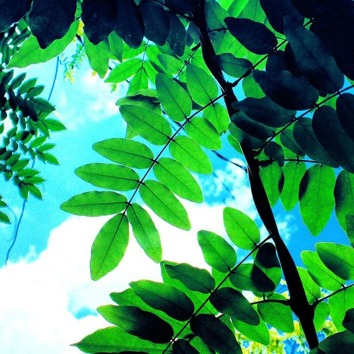 Hanging Out Check This Out Hello World Relaxing Enjoying Life ASIA East Asia Korea Visit Korea Colorful Summer Vibes Travel Trip Skyporn Leaves Summmer  Sky Southkorea