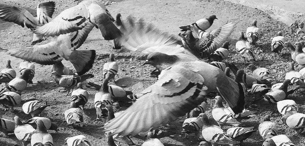 Motion Body Guard Bird Photography Birdwatching Birds In Flight Birds_collection