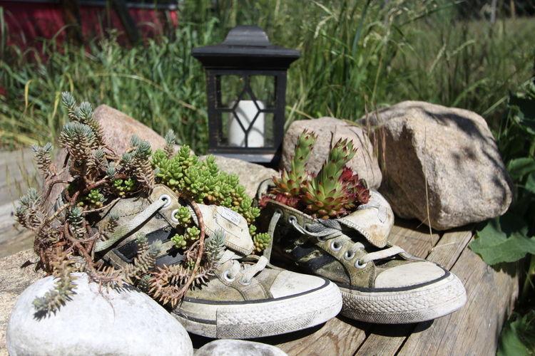 EyeEm Nature Lover EyeEmNewHere Mein Wilder Garten My Wild Garden Bauerngarten Beauty In Nature Old Shoes Recycling Recycling Art Succulent Plant The Still Life Photographer - 2018 EyeEm Awards