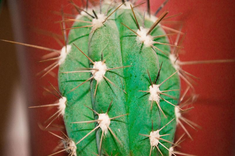 Kaktus Pflanzenliebe