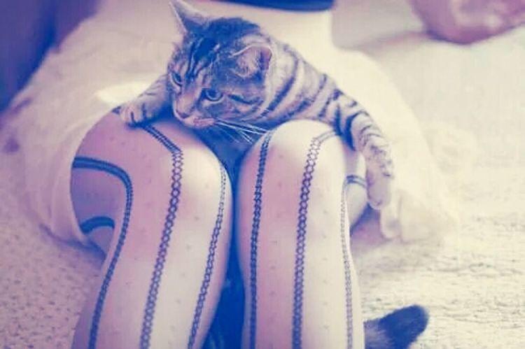 Cat♡ ..faithy