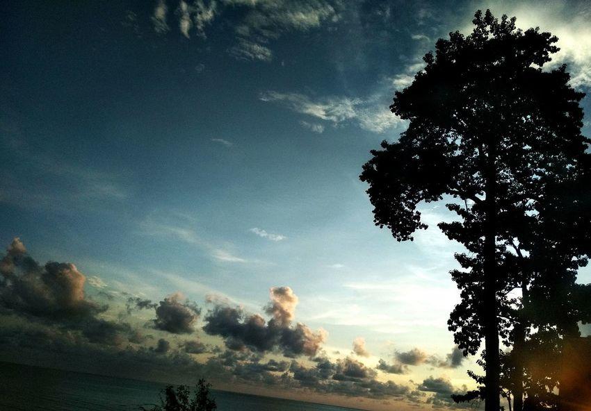 Close of day Beach Twilight Beach Twilight Clouds Twilight Tree Galaxy Astronomy Milky Way Silhouette Star - Space Sky Single Tree Calm Dramatic Sky Sandy Beach Storm Cloud Sky Only