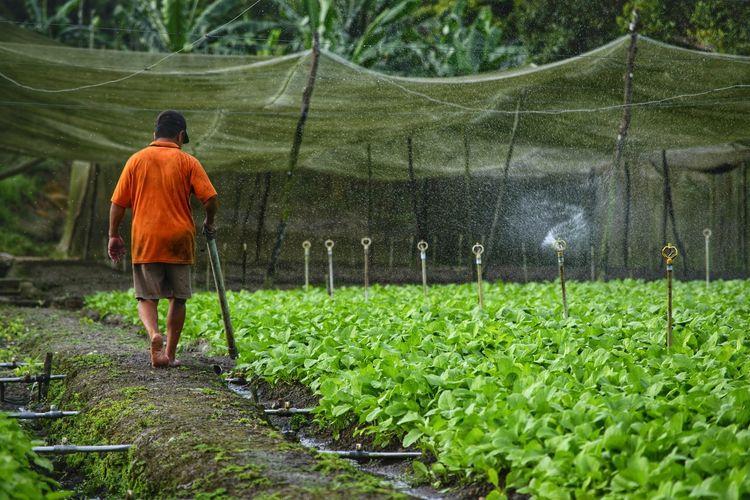 Rear View Of Farmer Walking On Field
