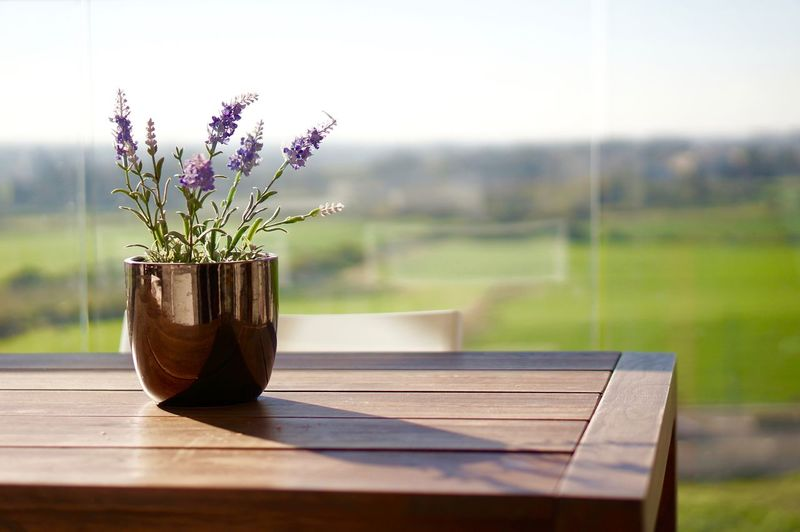 Close-up of flower pot on table at lawn