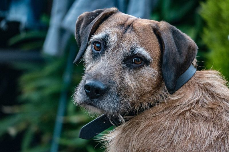 Animal Head  Depth Of Field Dog Pets