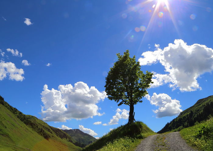 Maple tree in Grisons Alps, Switzerland. Blue Bright Clouds Colourful Prättigau Copy Space On The Way Green Miles Away Betterlandscapes Horizon Over Land Idyllic Landscape Lens Flare Maple Mountain Pivotal Ideas Remote Sky Upright Sunbeam Power Sunny Switzerland Tree