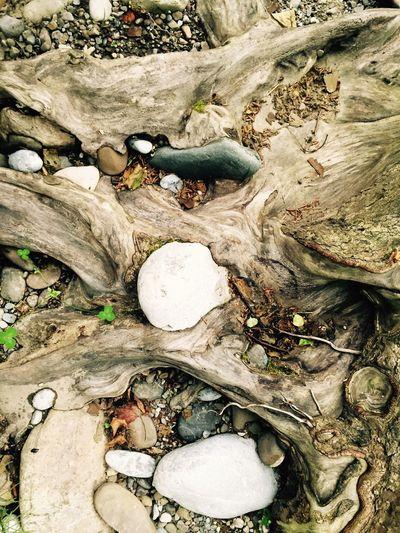 Stones and Roots Cantabriainfinita Picos De Europa