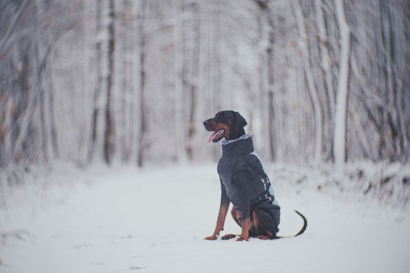 Full length of a dog on snow covered land