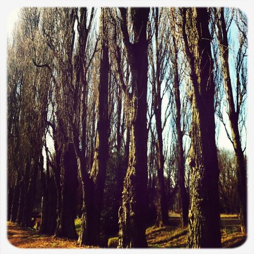Taking A Walk EyeEm Nature Lover